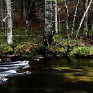 13.11.2014: Small River IV by Petri Volanen