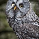 Great gray owl by alan tunnicliffe