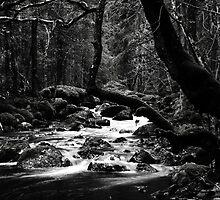13.11.2014: Small River V by Petri Volanen