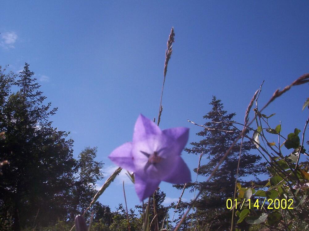 it's just a flower by akeagle1999