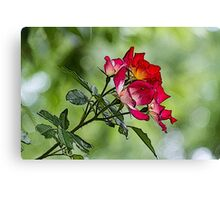 flower in spring Canvas Print