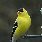 Brilliant Yellow by Martha Medford