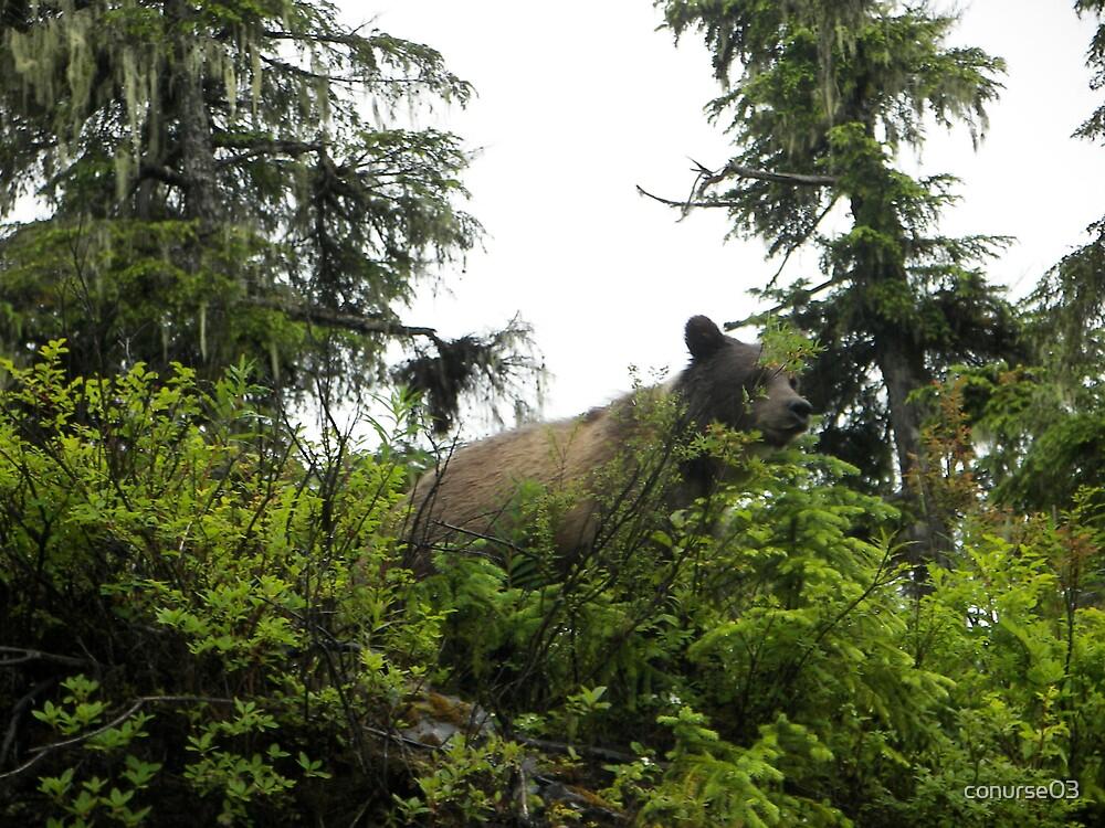Bear by conurse03