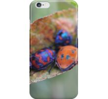 Friends in the garden - jewel bugs iPhone Case/Skin