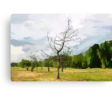 Alone dying tree. Canvas Print