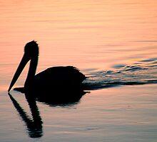 Pelican by miznix