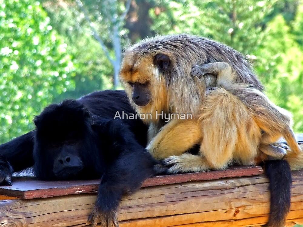 monkey trouble by Aharon Hyman