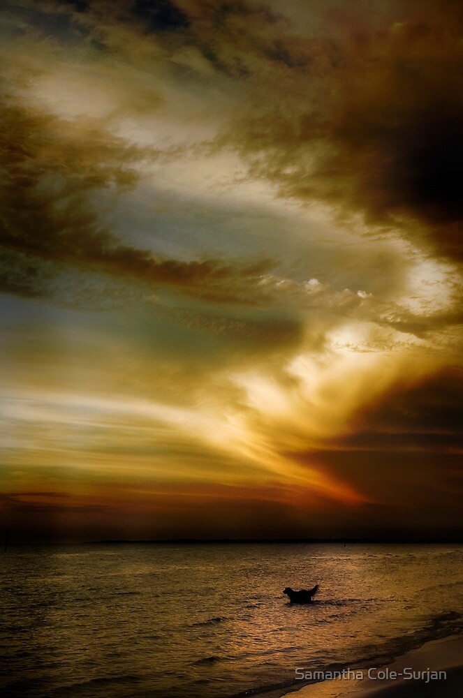 Carrums Light Spectacular by Samantha Cole-Surjan