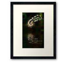 Fiddlehead Fern at Pond Framed Print