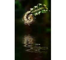 Fiddlehead Fern at Pond Photographic Print