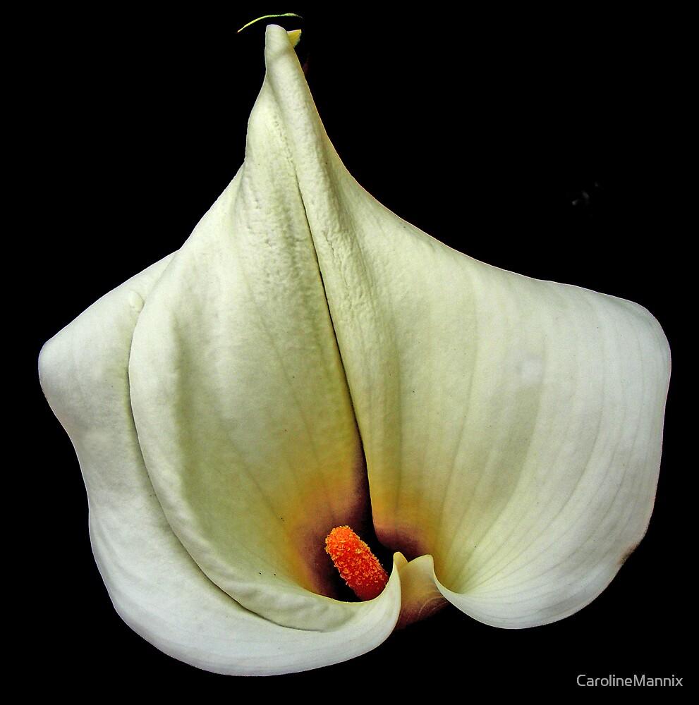 White Lily by CarolineMannix