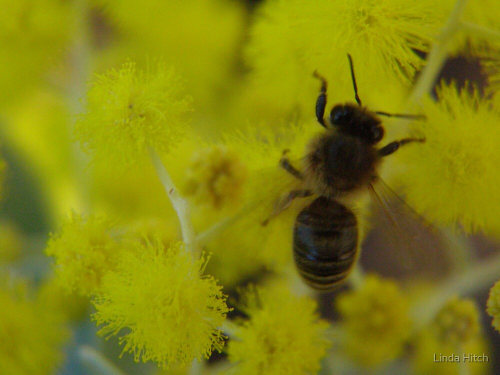 busy bee 2 by Linda Hitch