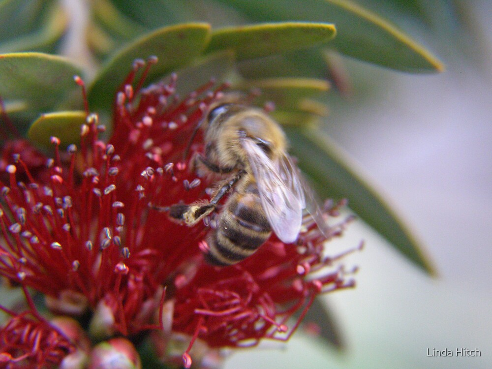busy bee 4 by Linda Hitch