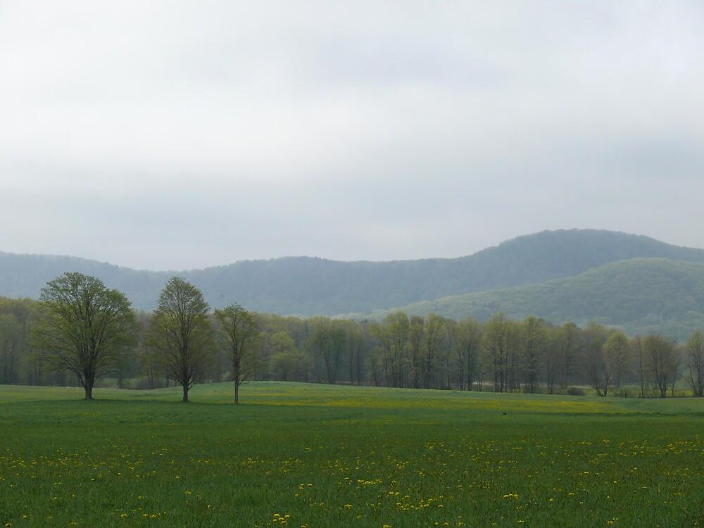 Spring Landscapes by Nina Andrews