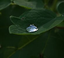 Rain Drops by inspired