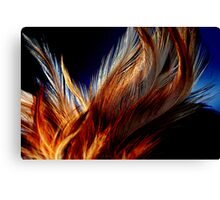Honey Dust Feathers Canvas Print