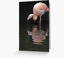 Flamingo reflections. Greeting Card