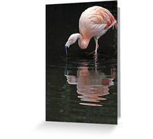 Flamingo reflections. Greeting Card