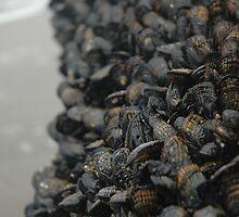 mussels by DANIEL SUDAR