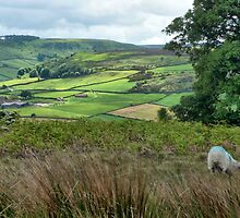 Across the Dale by Robert Gipson