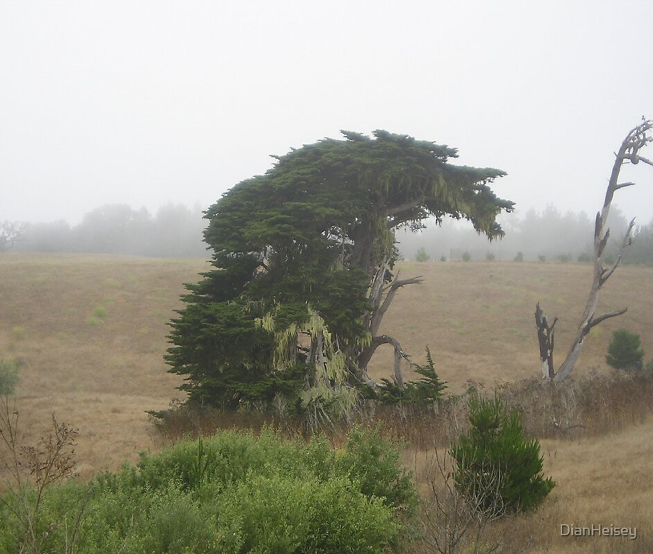 Fog Tree by DianHeisey