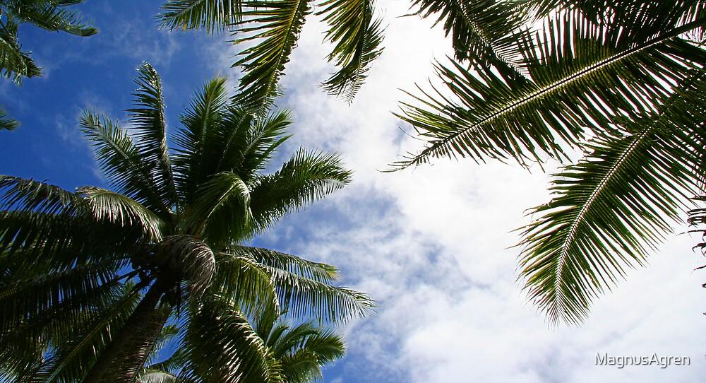 Palm trees by MagnusAgren