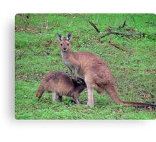 Mum and Joey Canvas Print