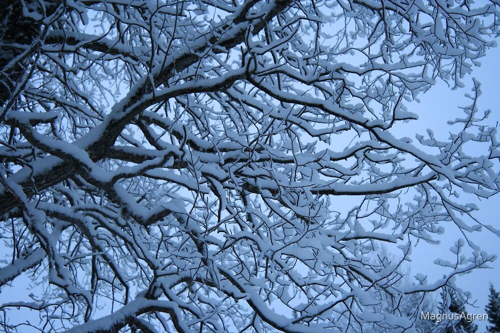 Snow tree by MagnusAgren