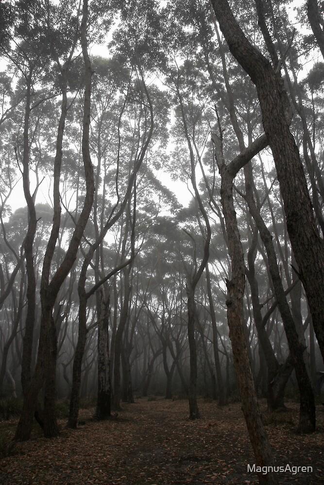 Misty trees by MagnusAgren