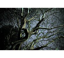 witchinghour Photographic Print