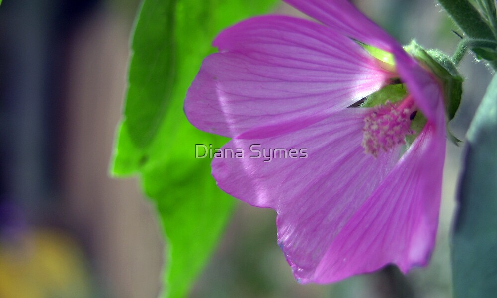 Lilac by Diana Symes