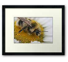 Searching for Pollen Framed Print