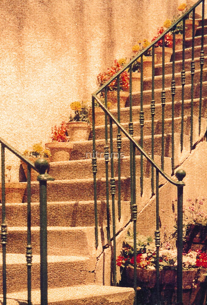 Outside staircase with potted plants. by nitrams