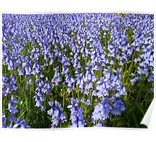 Bluebell Sea Poster