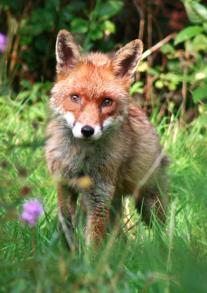 Fox Cub by epc2007