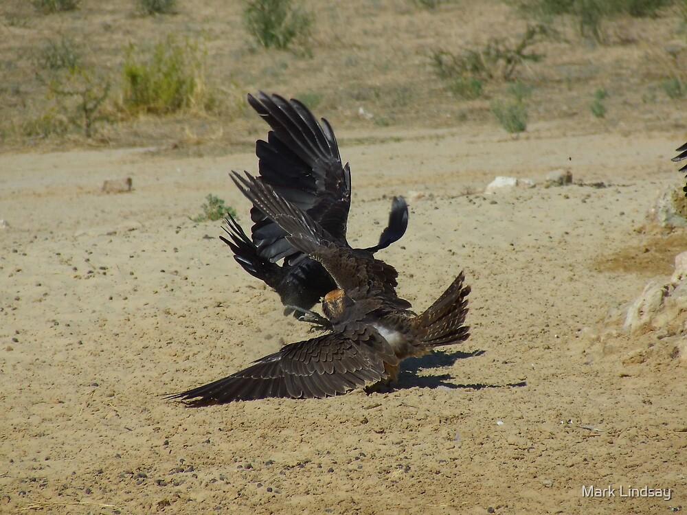 Birds of prey in combat  by Mark Lindsay