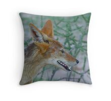 Black Backed Jackal Throw Pillow