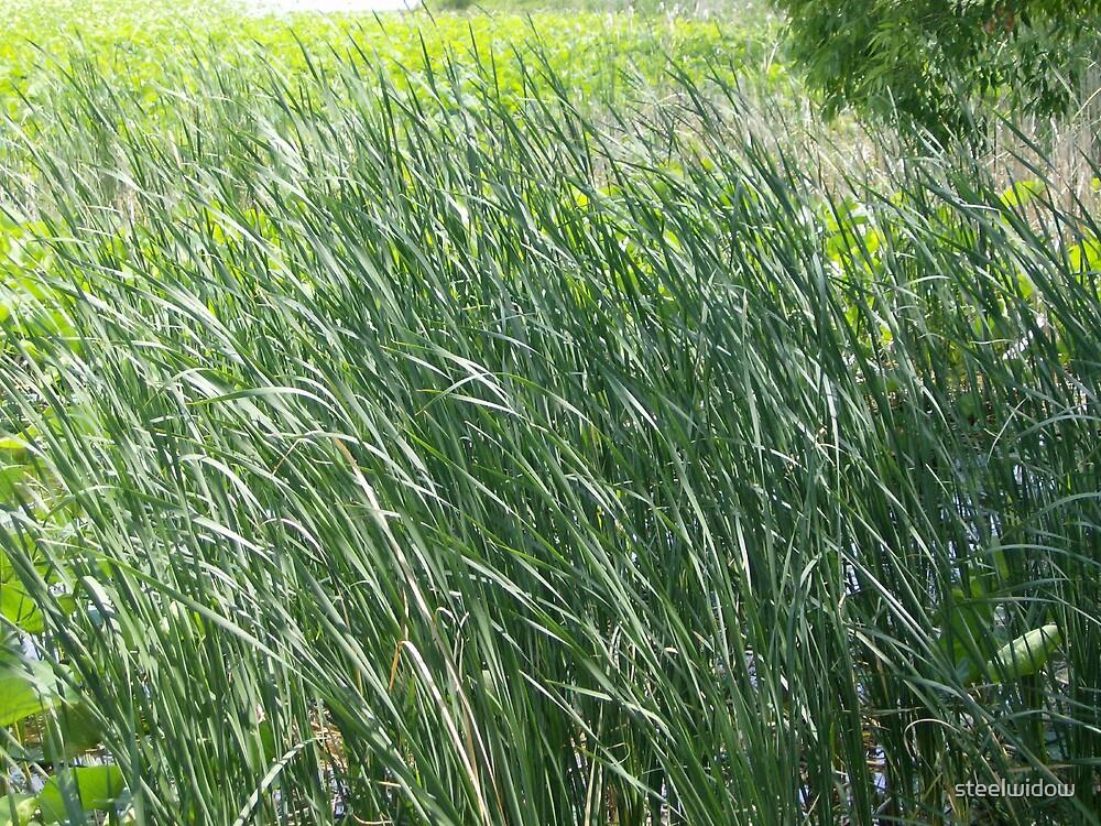 Swaying Pond Grass by steelwidow