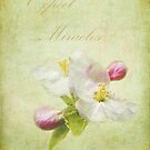 Expect Miracles by Kathilee