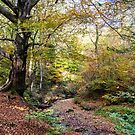 Autumn Woodland by David Lewins