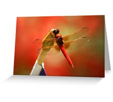 Red Patriot Greeting Card