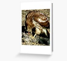 Red Tail Hawk with prey Greeting Card