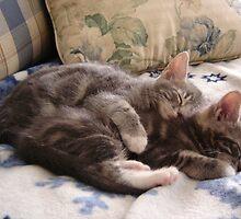 Snuggle  by Tamara Weiss