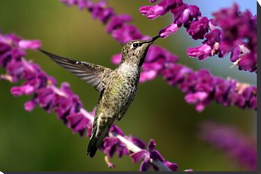 Hummingbird's View by DARRIN ALDRIDGE