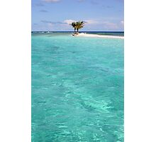 Three Palm Island 2 Photographic Print