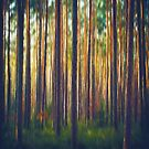 Sunlight on Forest Trees Generative Painting by Jim Plaxco