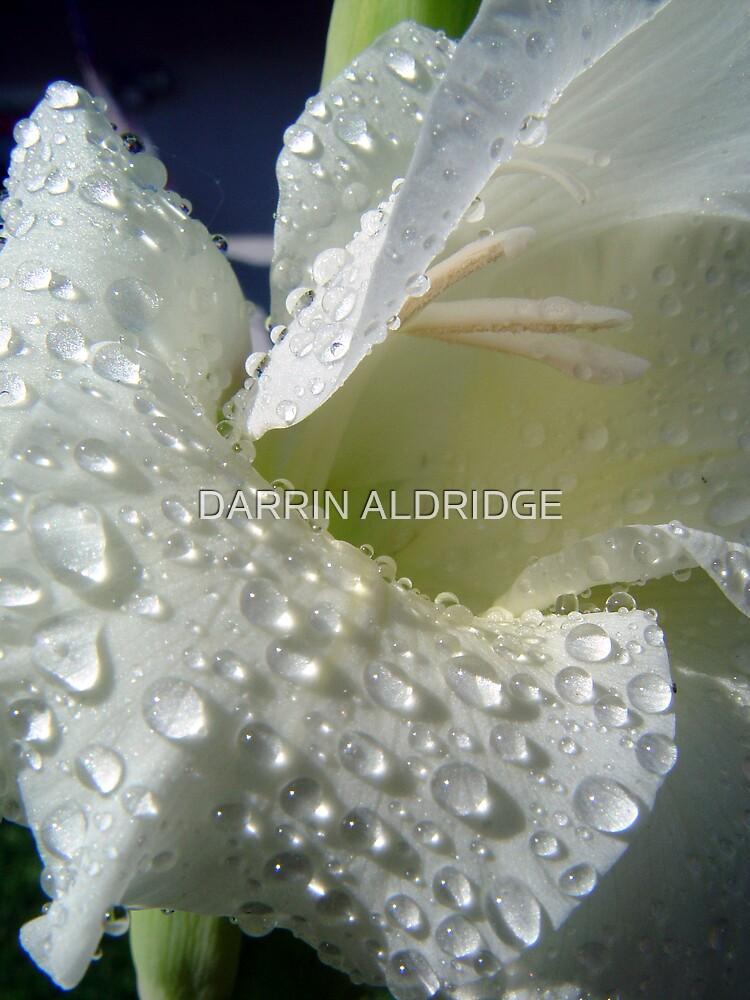 White Dew by DARRIN ALDRIDGE