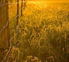 Long Grass in Afternoon Sun by MagnusAgren