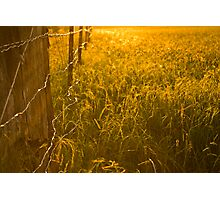 Long Grass in Afternoon Sun Photographic Print