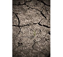 Life in Drought Photographic Print